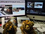『MyBook』の写真集づくりアプリケーションMyBookEditorをマスターして思い出を一冊に!