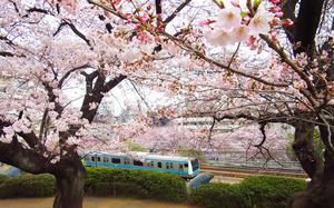 IMG_4285sssss-oomori-kaizuka.jpg